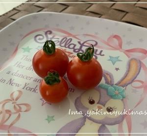 ハラミのミニトマト