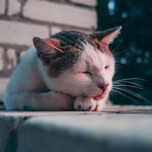 猫の寝る位置で猫がどう思っているか分かる!