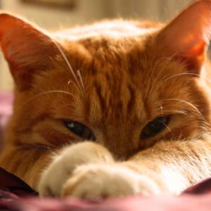 知っといたほうがいい猫に危険な食べ物5選!