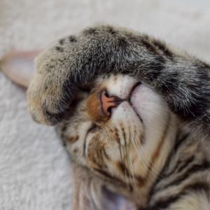猫も夢を見ている?!
