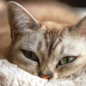 猫の日向ぼっこにはいい事がたくさん!