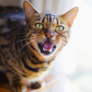 猫の爪切りの方法 暴れる時の対処法まとめ