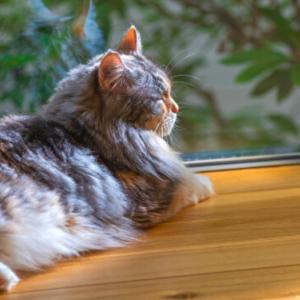 猫も熱中症に注意!