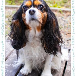 犬雑貨 O-Side おはっぺブログを始めました。