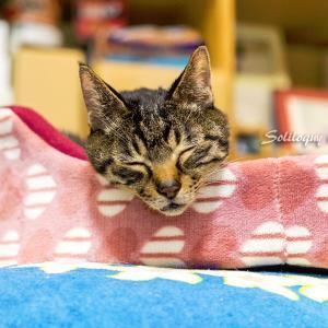 リンちゃんのベッドで・・・( ´艸`)ムププ