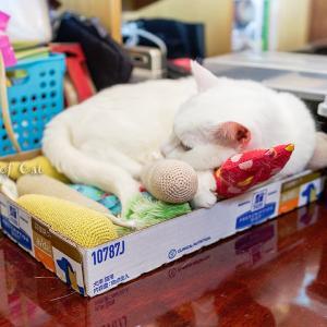最高のベッド!?( ´艸`)ムププ
