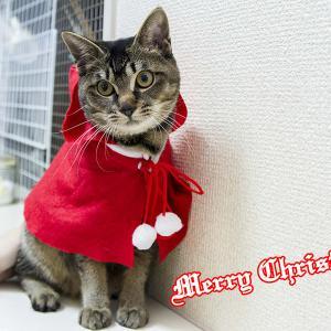 Merry Christmas(*´∇`*)