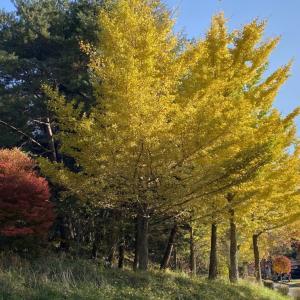 諏訪湖もいいけど福岡の大濠公園もね。