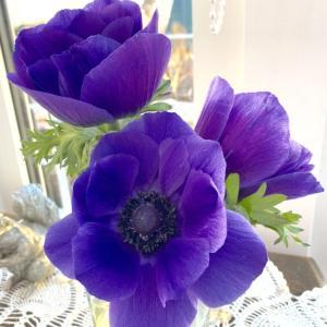 氷柱花のように。