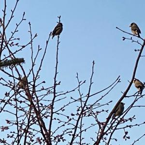 朝から鳥たちは恋の季節。