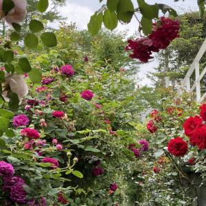 バラの香りの中と外。