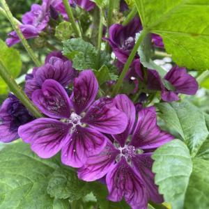 花殻摘み、掃除、雑草取り、コガネムシ捕獲の4大庭仕事。