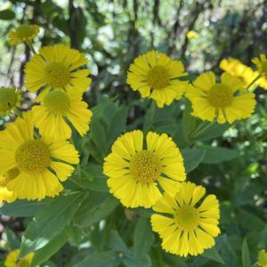 黄色の花、名前がわからなくてかわいそう。