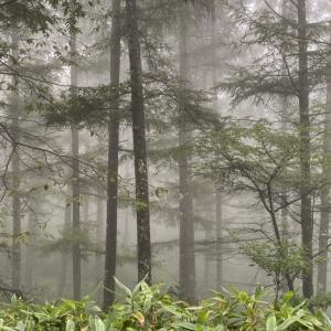 濃霧、大雨、ヒョウ、雷のち青空。