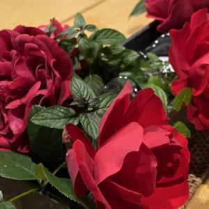 バラのお世話人。