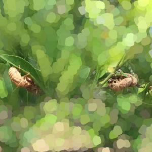 【虫注意】セミの観察