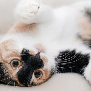 不思議な話 猫