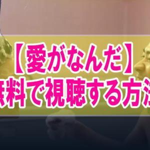 映画【愛がなんだ】を無料でフル動画視聴する方法はU-NEXT一択!
