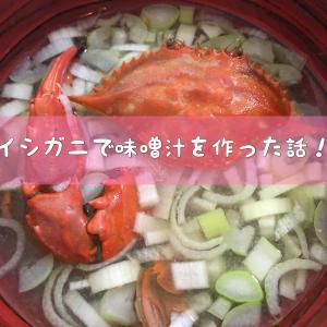 イシガニで味噌汁を作った話!