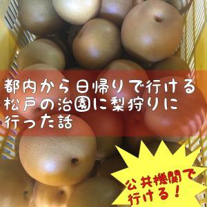 都内から日帰りで行ける松戸の治園に梨狩りに行った話