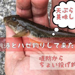市川港でハゼ釣りして来た話!