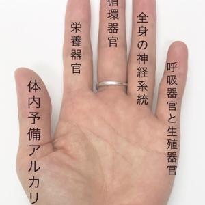 スリランカのアーユルヴェーダセンターで指輪を作ってみた【手の指と身体の各器官の関係】