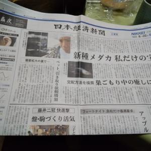 日経新聞でメダカ特集