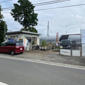 埼玉県ツアー二日目(花小屋さん、メダカ道楽さん訪問)