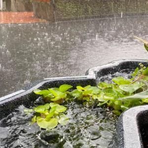 豪雨対策ノーガード