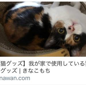 """【再開】""""きなこもち"""" ブログ はじめました☆"""
