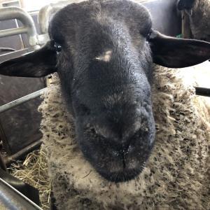 2/3 士別市:爆弾低気圧の到来 そして羊は震える