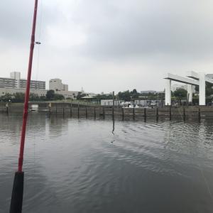 【釣り人必見!】大田区で釣れる魚とは!?