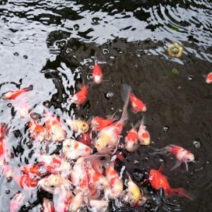 【緑から透明へ】夏から秋に向かう飼育水