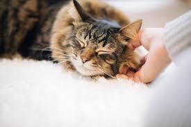 【ペットの病気】腎臓病は治らない!?延命治療と対策方法を学ぼう!
