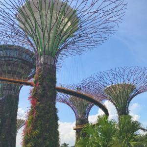 【2017年シンガポール旅行記⑨】緑のテーマパーク「ガーデンズ・バイ・ザ・ベイ」