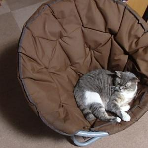 統合失調感情障害が癒される愛猫チャムの日常