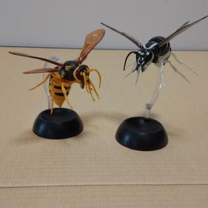 スズメバチ同士の戦い?