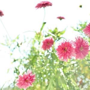 ●幸せの感度をあげよう!!③セロトニン「幸せホルモン」を活性させる♥