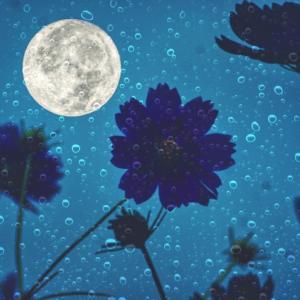 本日7月24日は満月ですよ~♥