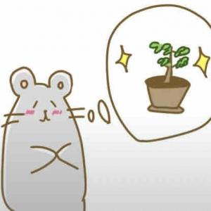 家庭菜園でストレス減少!