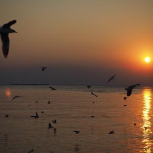 【ガイドブックに載ってない?】バンプーリゾートは夕陽がきれい&カモメの大群!