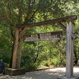 【ベイエリアのお散歩】ミュアウッズ国定公園で森林浴