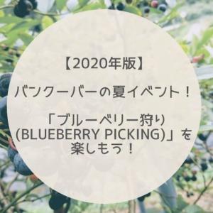 【2020年版】バンクーバーの夏イベント!「ブルーベリー狩り(Blueberry Picking)」を楽しもう!