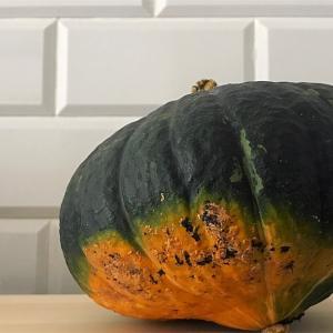 一番好きなかぼちゃ