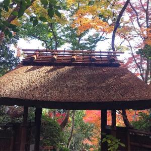 京都のもみじ