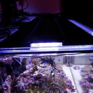 水槽照明を考える