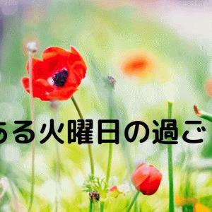 【#41】とある火曜日の過ごし方 (妹)