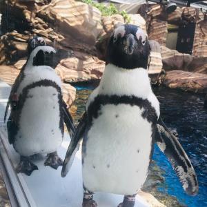 【日本初】動物好きは必見!世界最大級の両生類・オオサンショウウオやアザラシ、ペンギンなど約250種類のいきものが見れる京都水族館