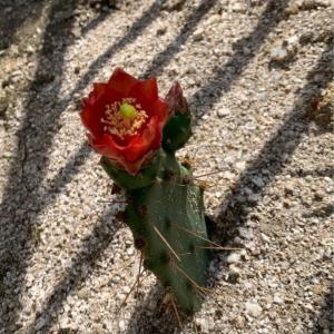 紅花団扇より危険なもの👊