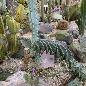 東山植物園訪問